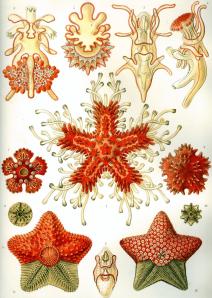 Ernst Heinrich Haeckel6